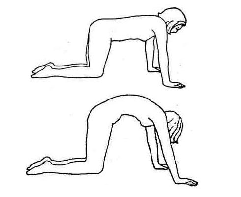 Упражнение «Кошка»