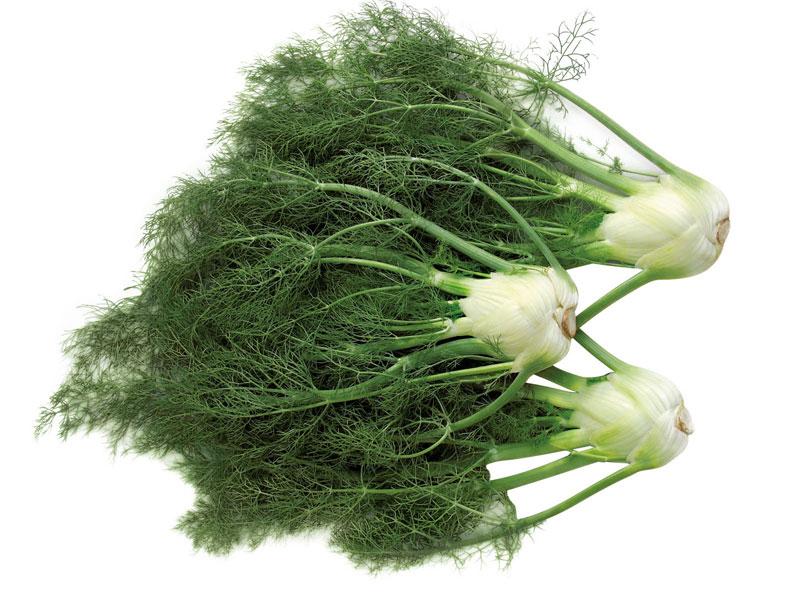 Травы для увеличения груди
